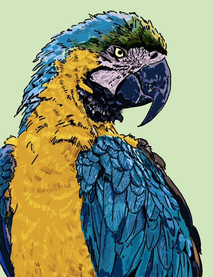 wk4_parrot
